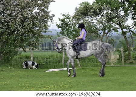 Dressage practise-beautiful grey horse going through dressage training ridden by pretty teenage girl - stock photo