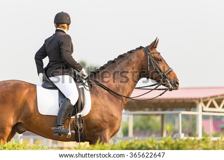 Dressage rider at equine competition.