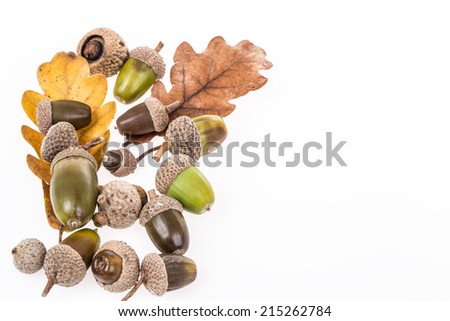 dried autumn leaves and acorns on white - stock photo