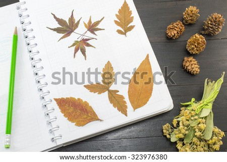 Dried autumn leaves collage on the notebook with a green pen - stock photo
