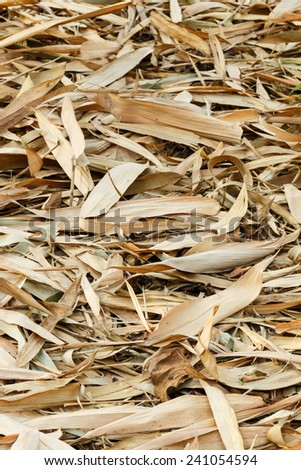 Dried bamboo leaves on the ground