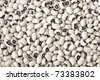 Dried black eyed beans close-up - stock photo