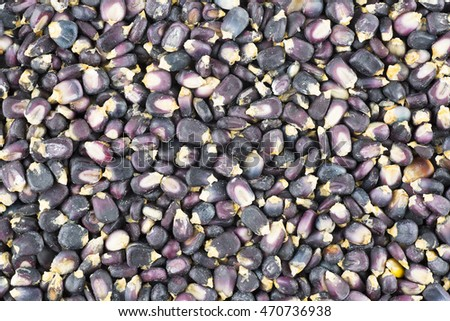 Dried blue corn hominy food background.