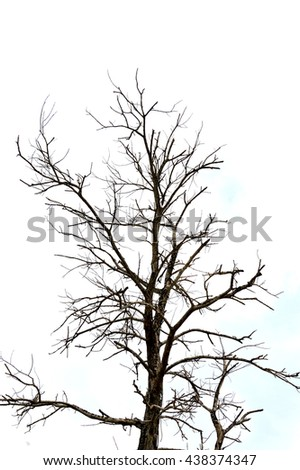 dried branches on a big tree with blue sky background
