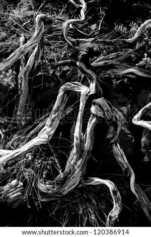 Dried branches over soil in La palma Caldera de Taburiente at Canary islands - stock photo