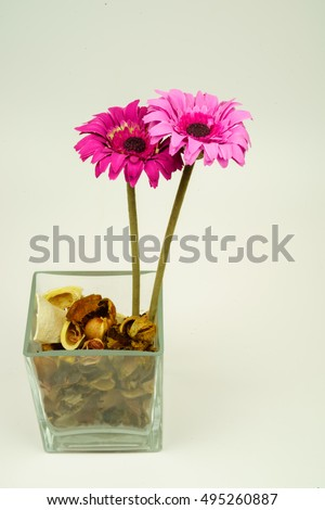 dried colorful flowers on a white background