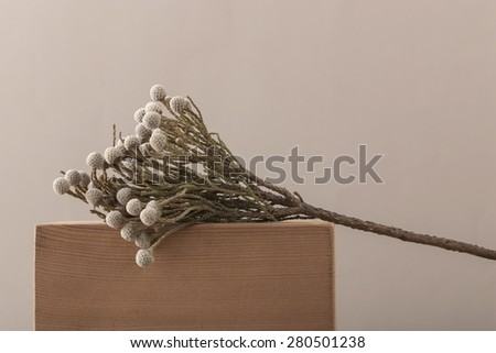 dried conifer fruits close up on the wood table, desk at the studio. - stock photo