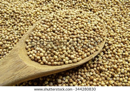 Dried coriander seed in the wooden spoon