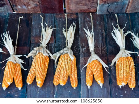 Dried corn hung on the wall. - stock photo