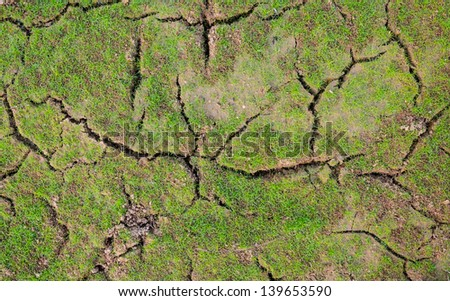 Dried cracked mud with alive grass - stock photo
