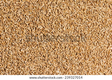 Dried cumin seeds  - stock photo