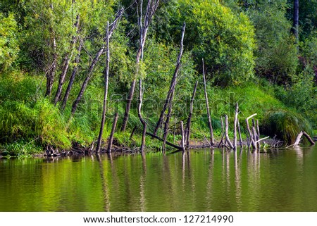 Dried dead trees on the river bank - stock photo