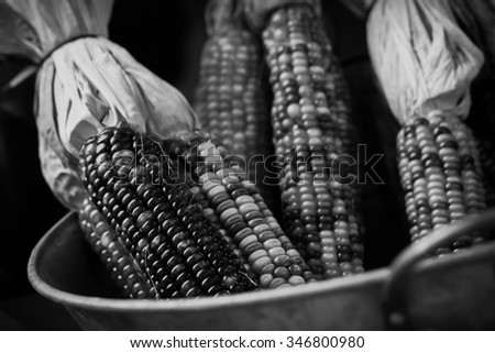 Dried decorative Indian corn for Autumn themed background image