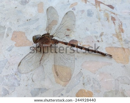 Dried dragonfly on the floor - stock photo