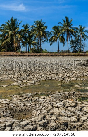 Dried earth because of rain dose not fall and the land lacked of water for agriculture near Bangkok In the strong sunlight, ideal for models of global warming.