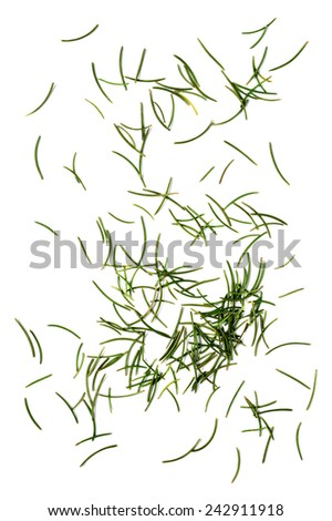 dried fir needles after christmas isolated over white background - stock photo