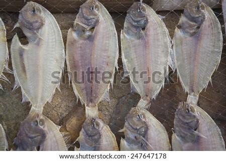 Dried fish at Mui Ne fishing village, Phan Thiet City, Viet Nam - stock photo