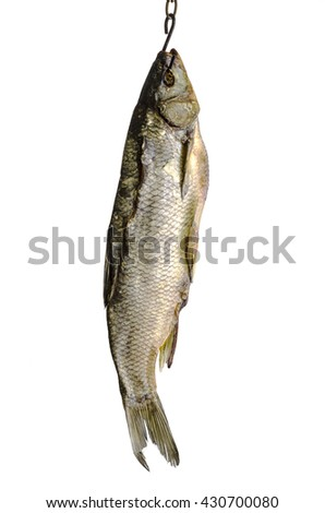 Dried fish on a hook on a white background