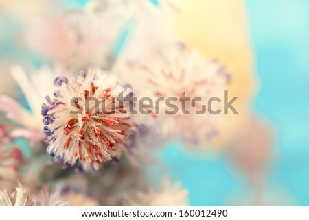 dried flower bud