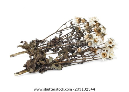 Dried flower isolated on white background