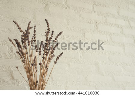 Dried Flowers for decoration with Empty Wall in Minimal Style - stock photo