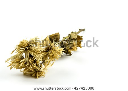dried flowers on isolate white background