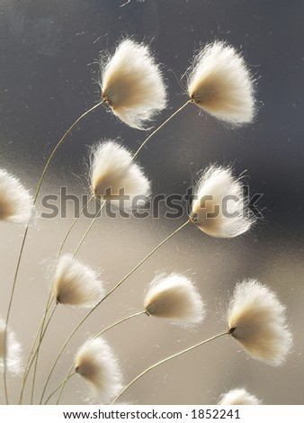 Dried flowers one in glass window, close-up - stock photo
