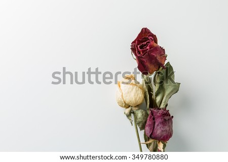 Dried flowers with copy space - stock photo