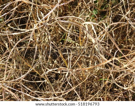 Dried Grass in Bare Soybean Field From Above