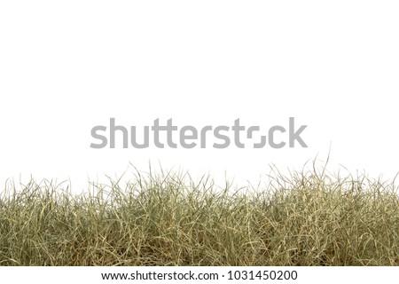 dry grass field background. Dried Grass Isolated On White Background.dry Field. Dry Field Background B