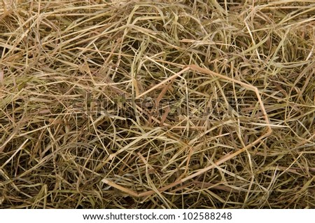 Dried hay background