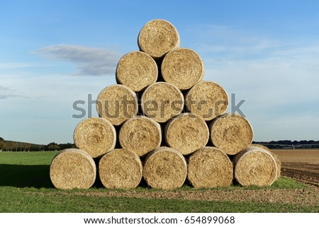 Dried hay bales as feed