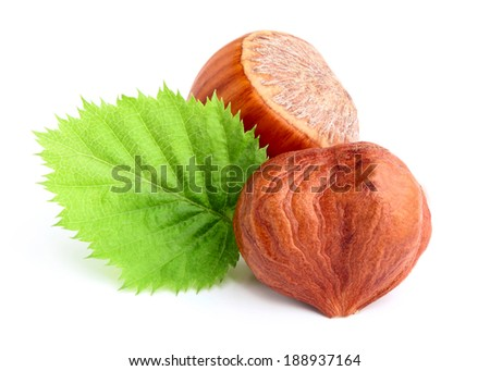 Dried hazelnuts with leaves on white background. - stock photo