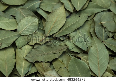 dried laurel leaves for cooking