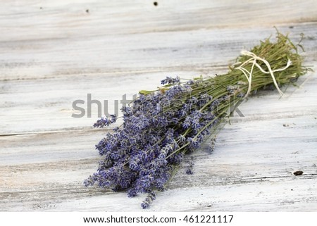 Dried Lavandula, common name lavender, traditional culinary  herb and for extraction of  lavender oil