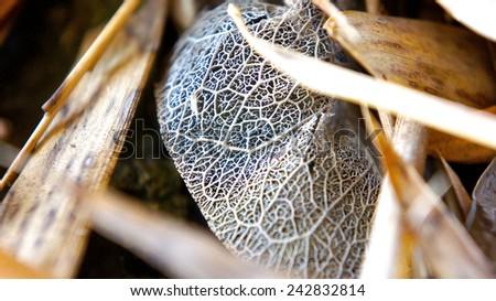 Dried leaf macro - stock photo