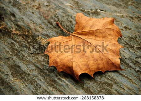 Dried leaf on a rock - stock photo