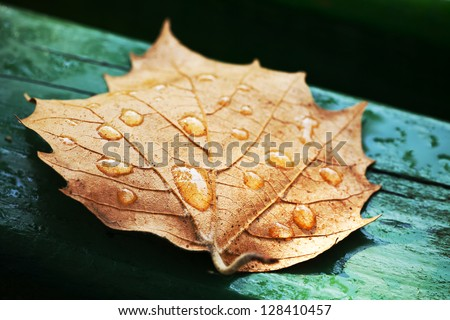 Dried leaf on the green bars wooden benches.