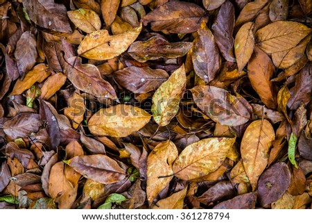 Dried Leafs Texture