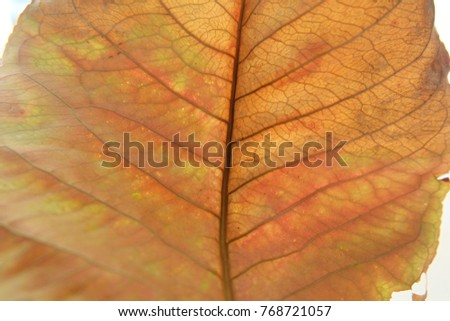 Dried leave abstract background.
