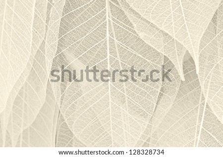 Dried leaves - stock photo