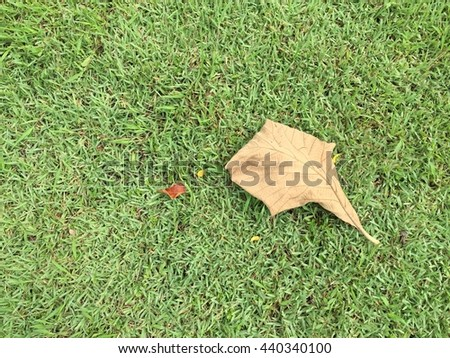 dried leaves falling in green grass background.