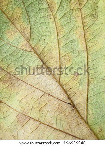 dried leaves grunge background