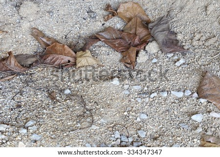 dried leaves on concrete floor