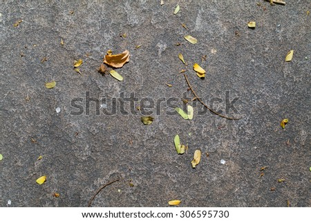 Dried leaves on the rock - stock photo