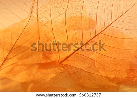 Dried leaves texture. Dried florist supplies, Beautiful nature pattern.