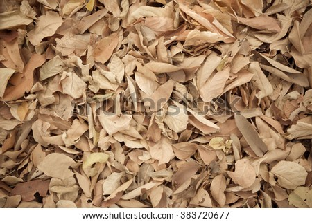 Dried leaves texture for background