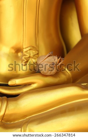 Dried lotus on golden Buddha hand. - stock photo