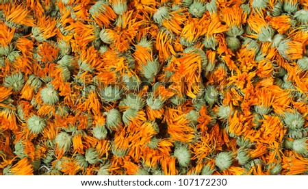Dried marigold - stock photo