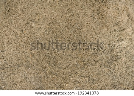 dried pine leaves needles pattern background texture - stock photo